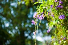 Purpura kwitnie bokeh zdjęcia stock