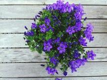 Purpura kwitnie lata uczucie Obraz Royalty Free