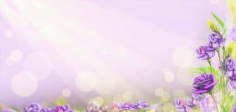 Purpura kwitnie na blured tle z bokeh, sztandar Fotografia Stock