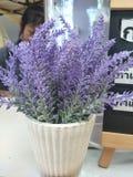 Purpura kwitnie w garnkach umieszczających na biurku zdjęcia royalty free