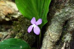purpura kwitnie w lesie zdjęcia stock