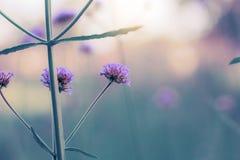Purpura kwitnie z niebem obrazy stock