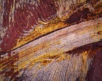 Purpura malujący drewno Obraz Stock