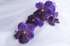 purpura orchids Royaltyfria Foton