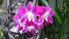 purpura orchids Royaltyfri Fotografi