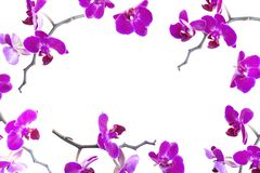 purpura orchids royaltyfria bilder