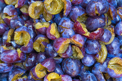 purpura plommoner Arkivfoton