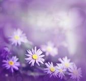 purpura tusenskönor Royaltyfria Bilder