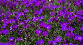 Purpurfärgad blomma Royaltyfri Foto