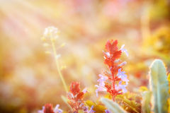 Purpurfärgad blommakrusidull i äng Arkivfoto