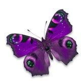 Purpurfärgad fjäril Arkivbild