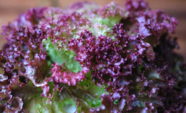 Purpurfärgad grönsak Arkivfoton