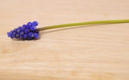 Purpurfärgad härlig blomma Arkivbild