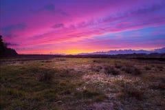 Purpurfärgad himmel över Wiesmoor Arkivbild