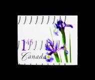 Purpurfärgad holländsk iris, blommaDefinitives (den 1st serien) serie, circa Arkivfoto