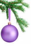 Purpurfärgad jul klumpa ihop sig att hänga på en isolerad granträdfilial Arkivfoto