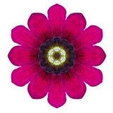 Purpurfärgad kalejdoskopisk blomma Mandala Isolated på vit Fotografering för Bildbyråer