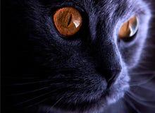 Purpurfärgad katt Royaltyfria Foton