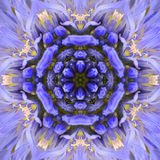 Purpurfärgad koncentrisk blommamittMandala Kaleidoscopic design Arkivbild