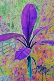 Purpurfärgad konst för bananträd Royaltyfria Bilder
