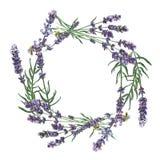 Purpurfärgad lavendel Blom- botanisk blomma Fyrkant för ramgränsprydnad arkivbild