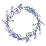 Purpurfärgad lavendel Blom- botanisk blomma Lös vårbladvildblomma Fyrkant för ramgränsprydnad stock illustrationer