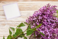 Purpurfärgad lila filial på träbakgrund Mellanrum hälsningkort Royaltyfria Foton