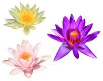 Purpurfärgad lotusblomma som isoleras på vit Royaltyfria Foton