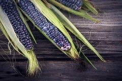 Purpurfärgad majs med sidor Royaltyfria Foton