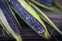 Purpurfärgad majs med sidor Arkivbilder