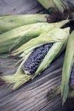 Purpurfärgad majs med sidor Royaltyfri Fotografi