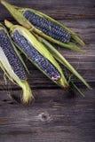 Purpurfärgad majs med sidor Arkivfoton