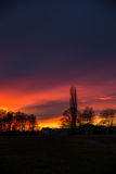 Purpurfärgad och orange solnedgång bak träd, Tyskland Arkivfoton