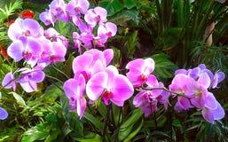 Purpurfärgad och violett orkidé i parkera Royaltyfri Bild