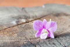 Purpurfärgad orchid Royaltyfri Foto