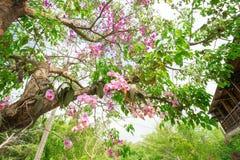 Purpurfärgad orchid Fotografering för Bildbyråer