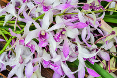 Purpurfärgad orchid Arkivbilder
