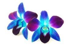 Purpurfärgad orkidé Arkivbilder
