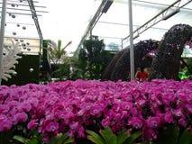 Purpurfärgad orkidé, blommafestival Royaltyfria Foton