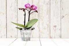 Purpurfärgad orkidé i metallkruka, på träplankor royaltyfria foton