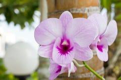 Purpurfärgad orkidé i trädgården Arkivbilder