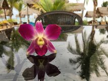 Purpurfärgad orkidé på den glass tabellen Arkivbilder