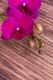 Purpurfärgad orkidé på träbakgrund kopiera avstånd greeting lyckligt nytt år för 2007 kort Vår Kvinnadag 8 mars Royaltyfria Bilder