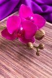 Purpurfärgad orkidé på träbakgrund kopiera avstånd greeting lyckligt nytt år för 2007 kort Vår Kvinnadag 8 mars Arkivfoton
