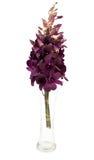 Purpurfärgad orkidéblomma i den isolerade vita vasen Royaltyfri Fotografi