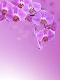 Purpurfärgad orkidéfilial med mjuk abstrakt bokehbakgrund Royaltyfri Foto
