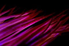 Purpurfärgad rosa bakgrund för grönsaker arkivfoton