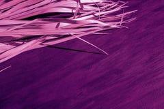 Purpurfärgad rosa violett magentafärgad färg för svart torr för bakgrundspalmträd för filial grå för kanfas proton för tyg arkivfoto