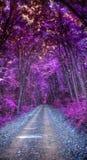 Purpurfärgad skog Royaltyfria Bilder