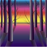 Purpurfärgad skog på solnedgången Royaltyfri Fotografi